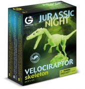 JURASSIC NIGHT - VELOCIRAPTOR SKELETON